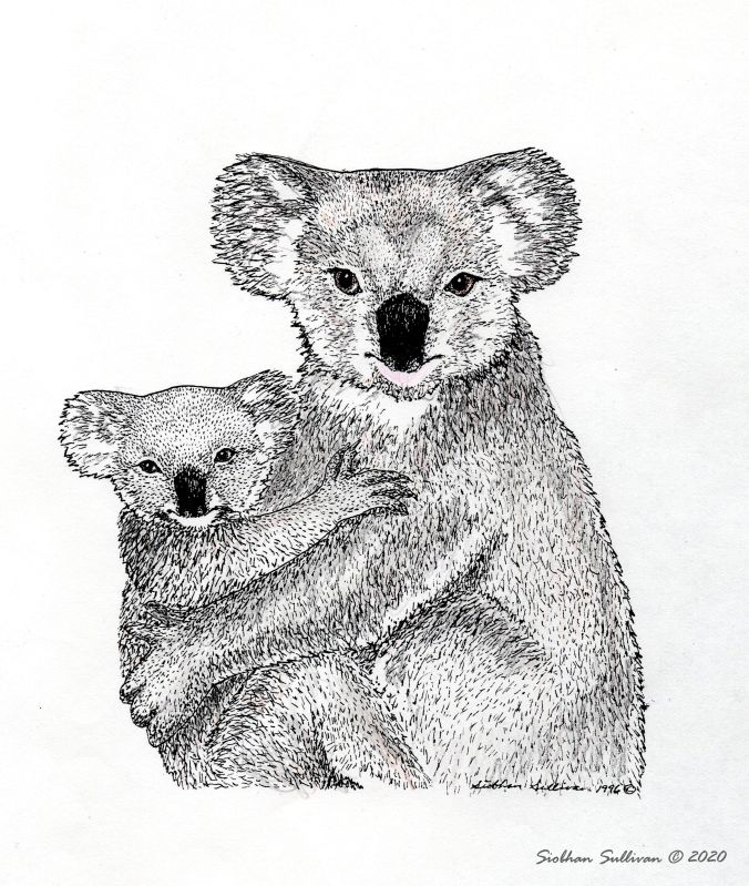 Mother's Day thoughts - drawing of koala & joey by Siobhan Sullivan May 2020