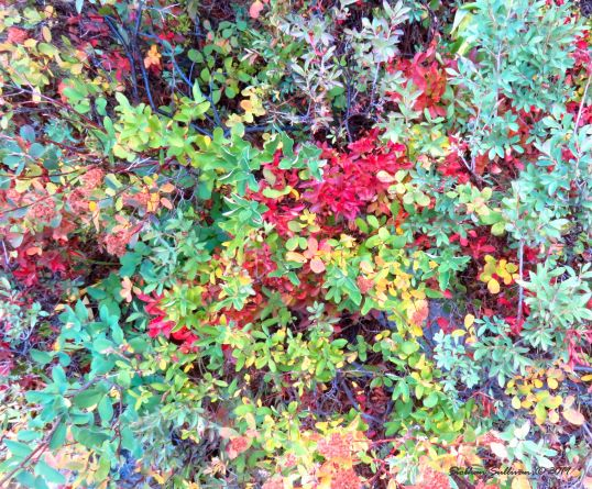 Autumn's kaleidoscope Oregon September 2016