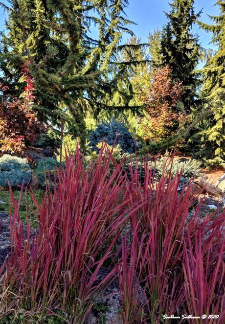 The Oregon Garden September 2018