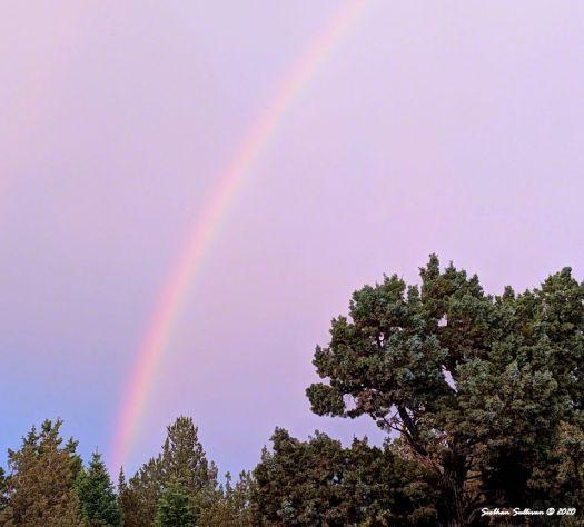 Rainbow over junipers June 2020