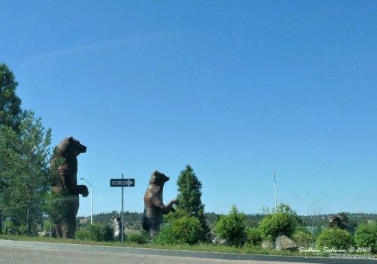 Mother Bear in Madras, Oregon