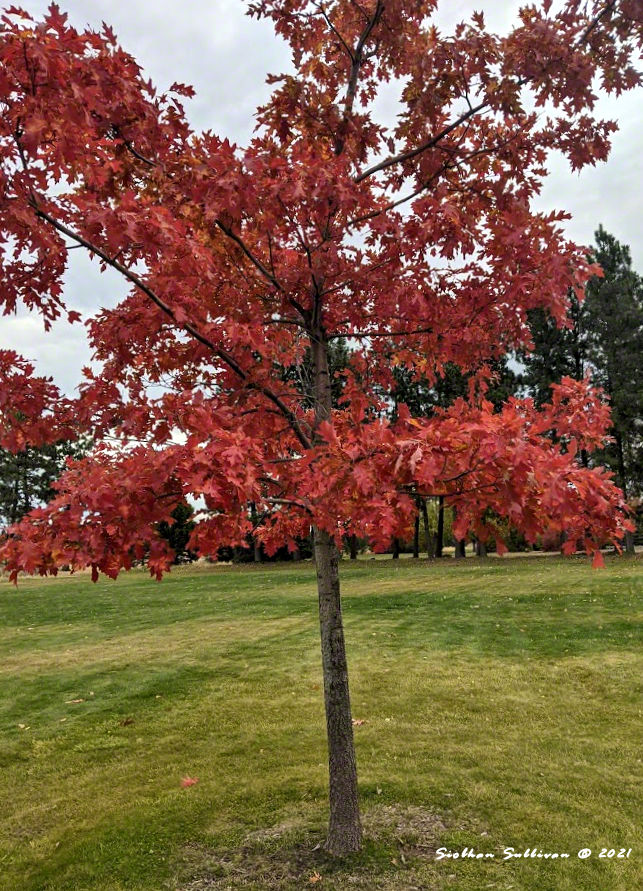 Autumn leaves in Bend, Oregon