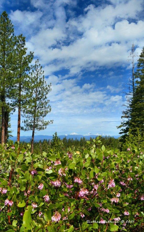 Spectacular sights seen near Bend, Oregon