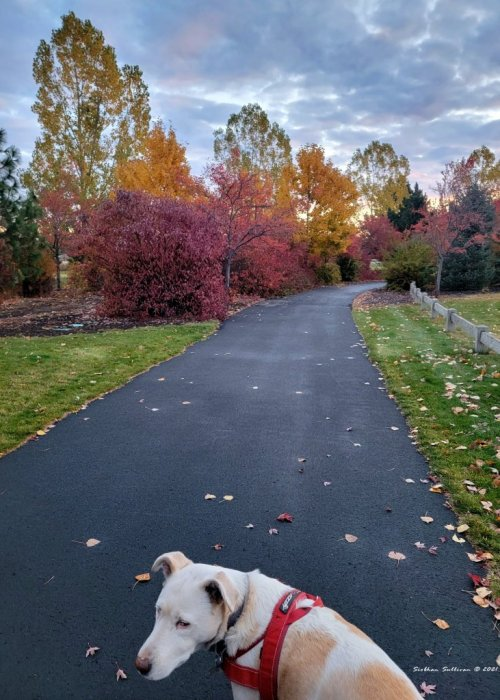 Fall walk with friend