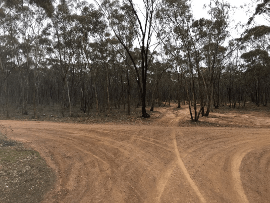 A path with trees on the side of a dirt field  Description automatically generated