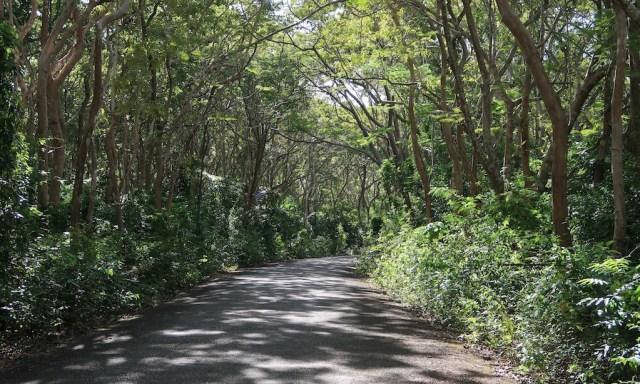 Verwunschener Wald kurz vor dem Salagdoong Beach