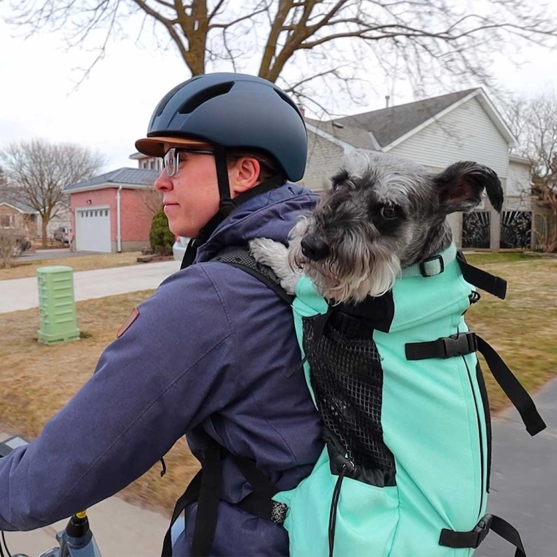 Kasper the dog in a k9 backpack on cloudy day