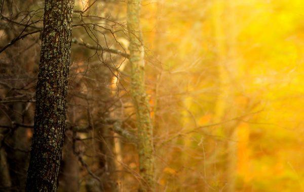 2017年11月のラッキーカラーは「黄」。カラーの意味や効果について