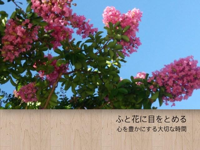 草花を感じて 、心を豊かにする暮らし  vol.1 サルスベリ(百日紅)