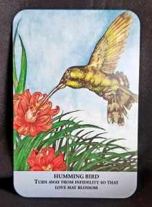 Hummingbird sipping nectar from an orange flower