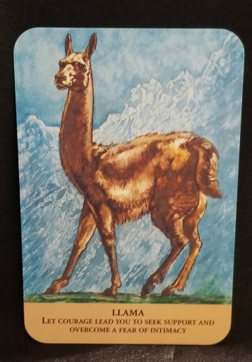 Llama Oracle Carad - A brown llama standing on the plain, mountains in the background
