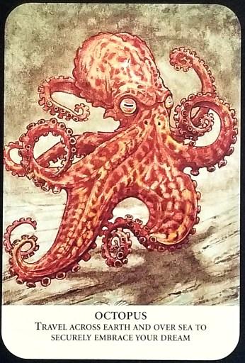 Octopus - a large orange octopus