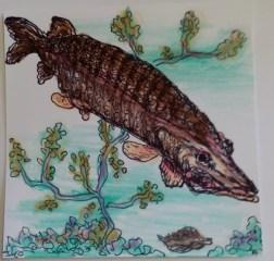 poissons 2 par Claire Archambault