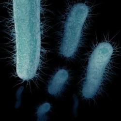 Antibiotic Resistant Superbug