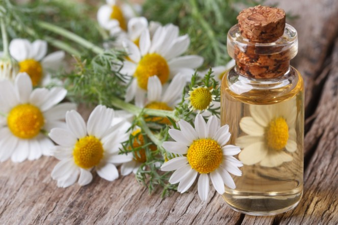 Chamomile-oil-as-essential-oils-for-sleep