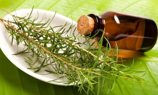 Essential-oils-for-warts-Tea-Tree-oil