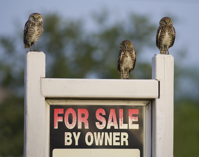 why you need an agent for a FSBO