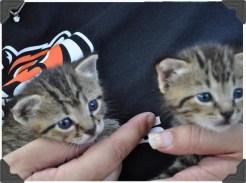 10-BE-kittens