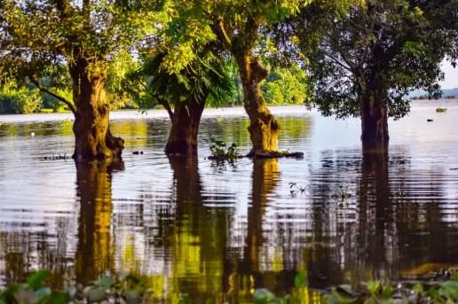 Son Beel Assam, the second largest wetland in Asia বরাক উপত্যকার সম্ভাবনাময় পর্যটন স্থল শনবিল | হিজল গাছ | Places to visit in Karimganj | Son Beel Assam | Son Beel wetland