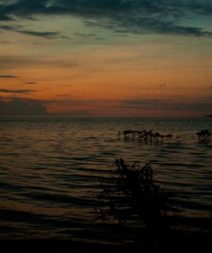 sunset (gagal)