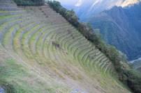 The terraces of Wiñay Wayna - Day 3