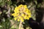 Yellow flower in the Secret Garden