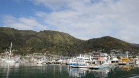 Boats in the harbour at Picton