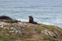 Seal at Penguin Place