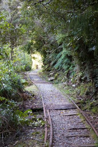 Walking in the tracks at Ngakawau
