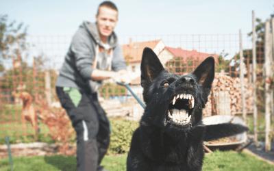 Uitvallende hond – waarom roepen niet helpt en wat dan wel werkt