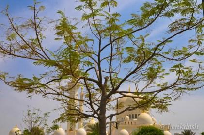 Sheikh Zayed Grand Mosque Abu Dhabi 8