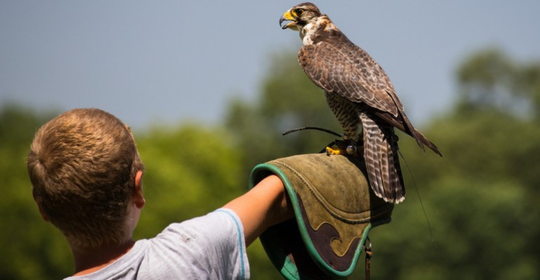 boy with falcon on his arm