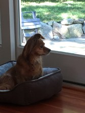 Fenway, not barking