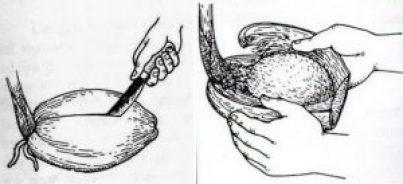 Cara Jitu Membuat Bonsai Kelapa Bercabang