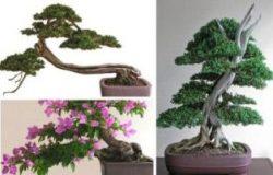 Master Bonsai Dunia Dengan Karyanya