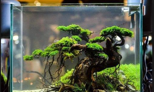 Seni Bonsai Aquascape Yang Mempesona