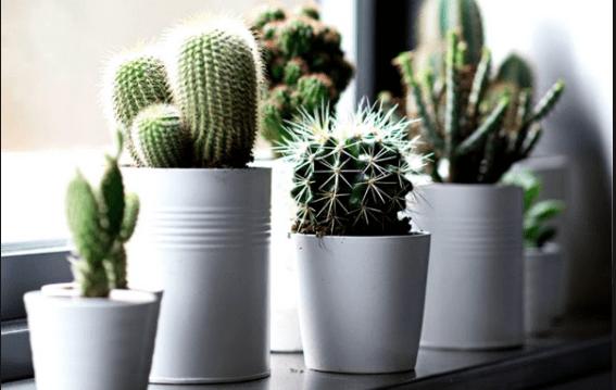 12 Tanaman Indoor Mini Dalam Ruangan & Dekorasi Rumah