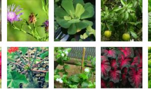 Nama Latin Tumbuhan & Tanaman Hias Yang Perlu Diketahui
