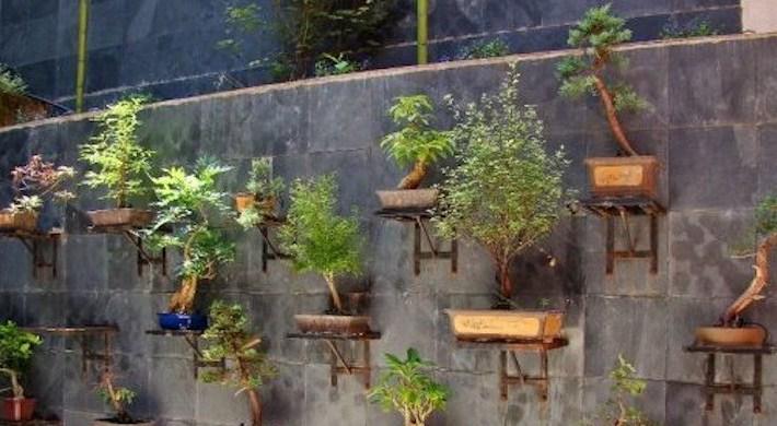 Desain Taman Bonsai : Inspirasi Untuk Menampilkan Kebun Bonsai Anda Terlihat Indah