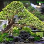 Tips Pembentukan Seni Bonsai Unik Jepang Yang Harus Diketahui