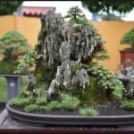 Keindahan Alam & Estetika Seni Pohon Bonsai Yang Patut Kita Kagumi
