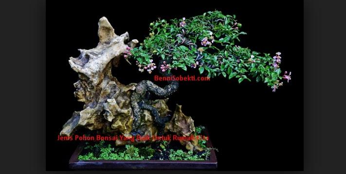 Jenis Pohon Bonsai Yang Baik Untuk Rumah Kita