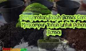 Persyaratan Tanah Bonsai: Cara Mencampur Tanah Untuk Pohon Bonsai