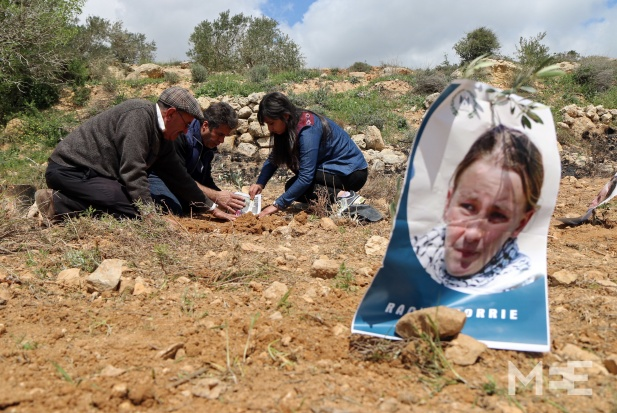Palestinians bury olive trees in the West Bank in commemoration of the death of Rachel Corrie CREDIT: Middle East Eye/Ahmad Al-Bazz