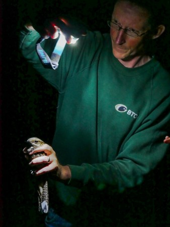 Greg Conway and a Nightjar