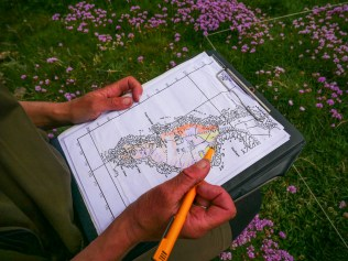 Mapping out quadrats and habitat areas