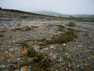 The high tide strand line on Henllwyn