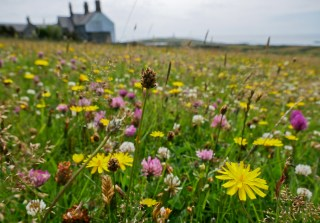 The blooming meadow of the Plas fields