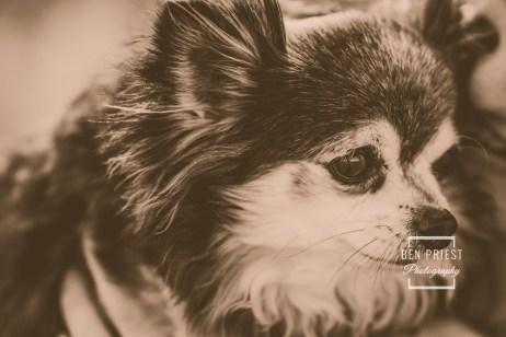 millie-the-dog-photographs-089