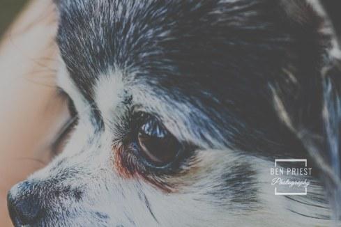 millie-the-dog-photographs-120